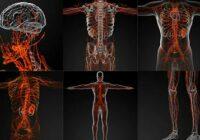 The Lymphatic System - Лимфатическая система