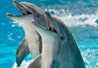 Dolphins - Дельфины