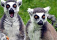 звуки животных на английском