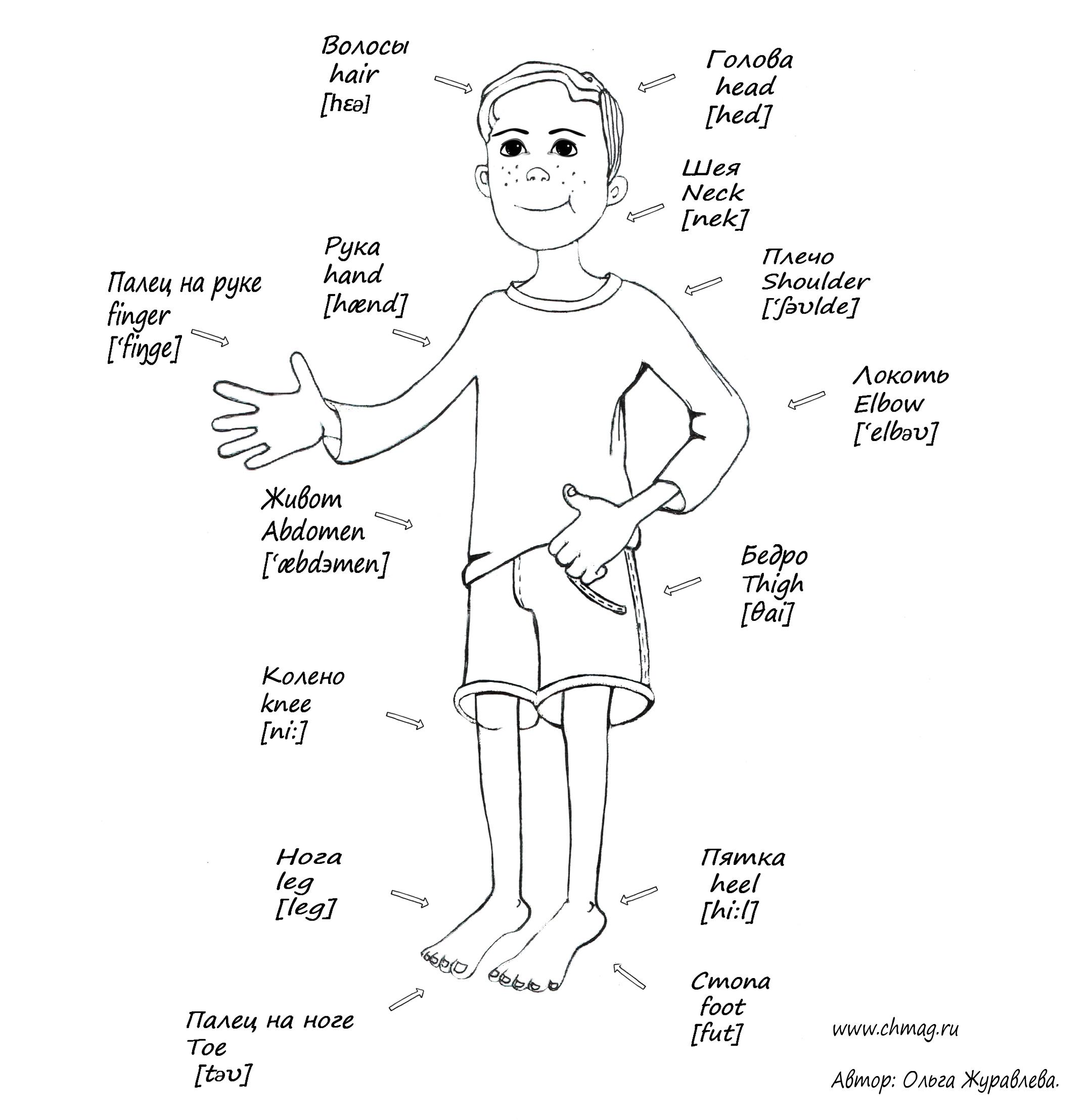 Части тела человека на английском в картинках