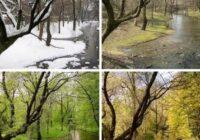 Seasons - Времена года