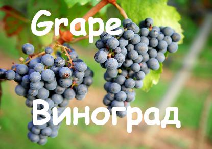 Grape Vinograd